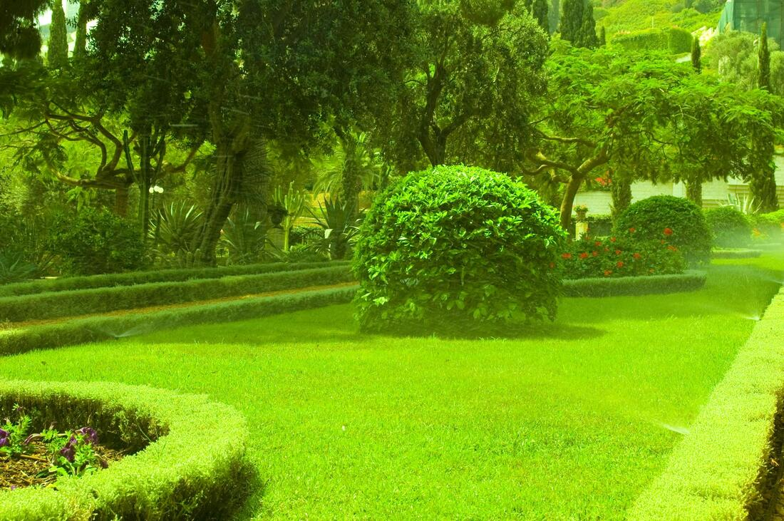healthy lawn after services